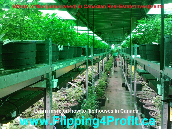 Effects of Marijuana (weed) in Canadian Real estate investments